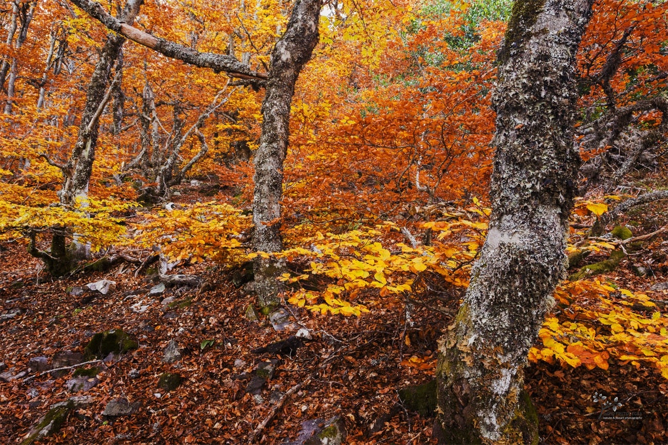 Hayedo de la Pedrosa - Color - David Frutos Egea | Fotógrafías en color