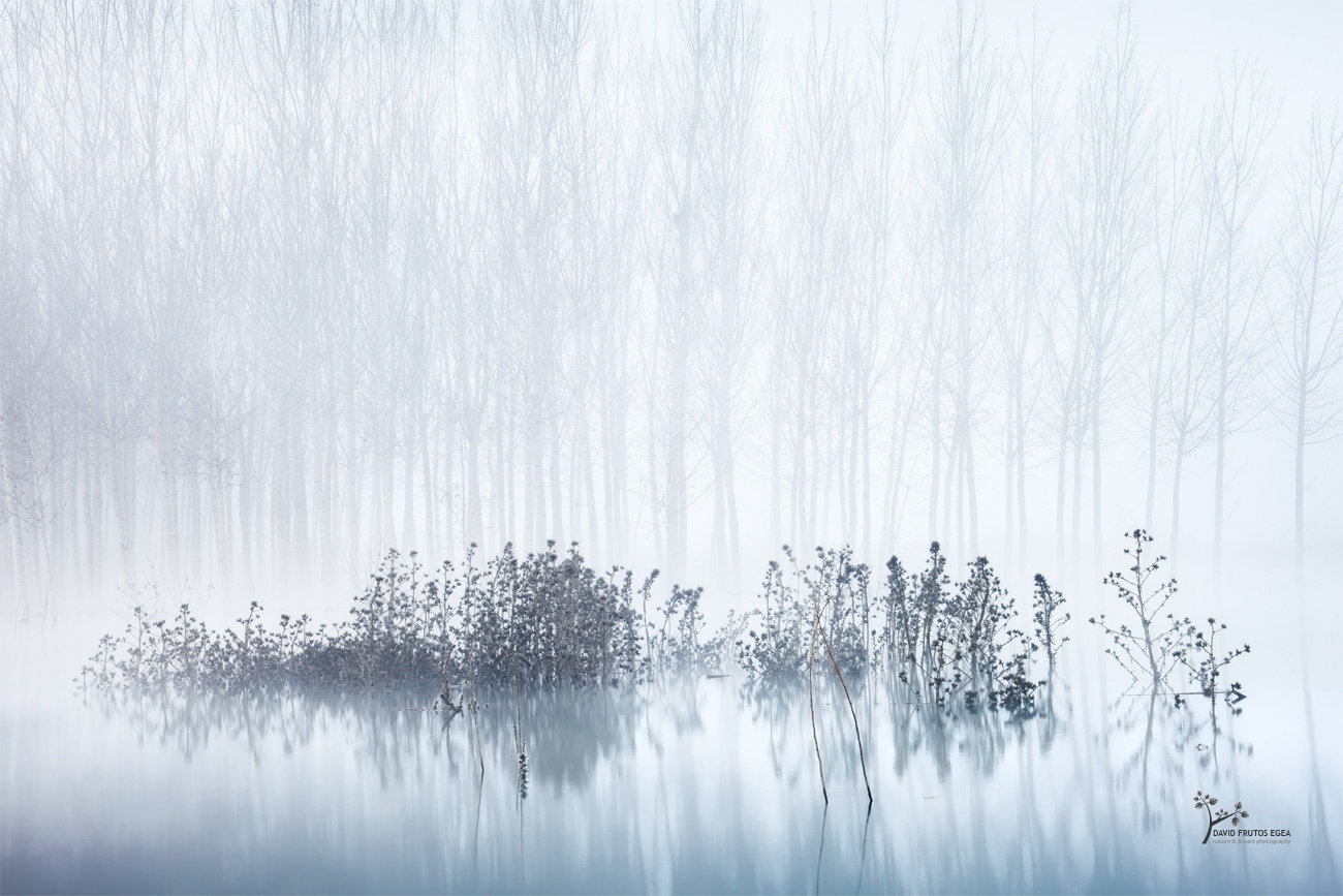 Cold & Foogy Morning in the Swamp - Seres del Pantano - David Frutos Egea | El agua y la niebla son protagonistas.