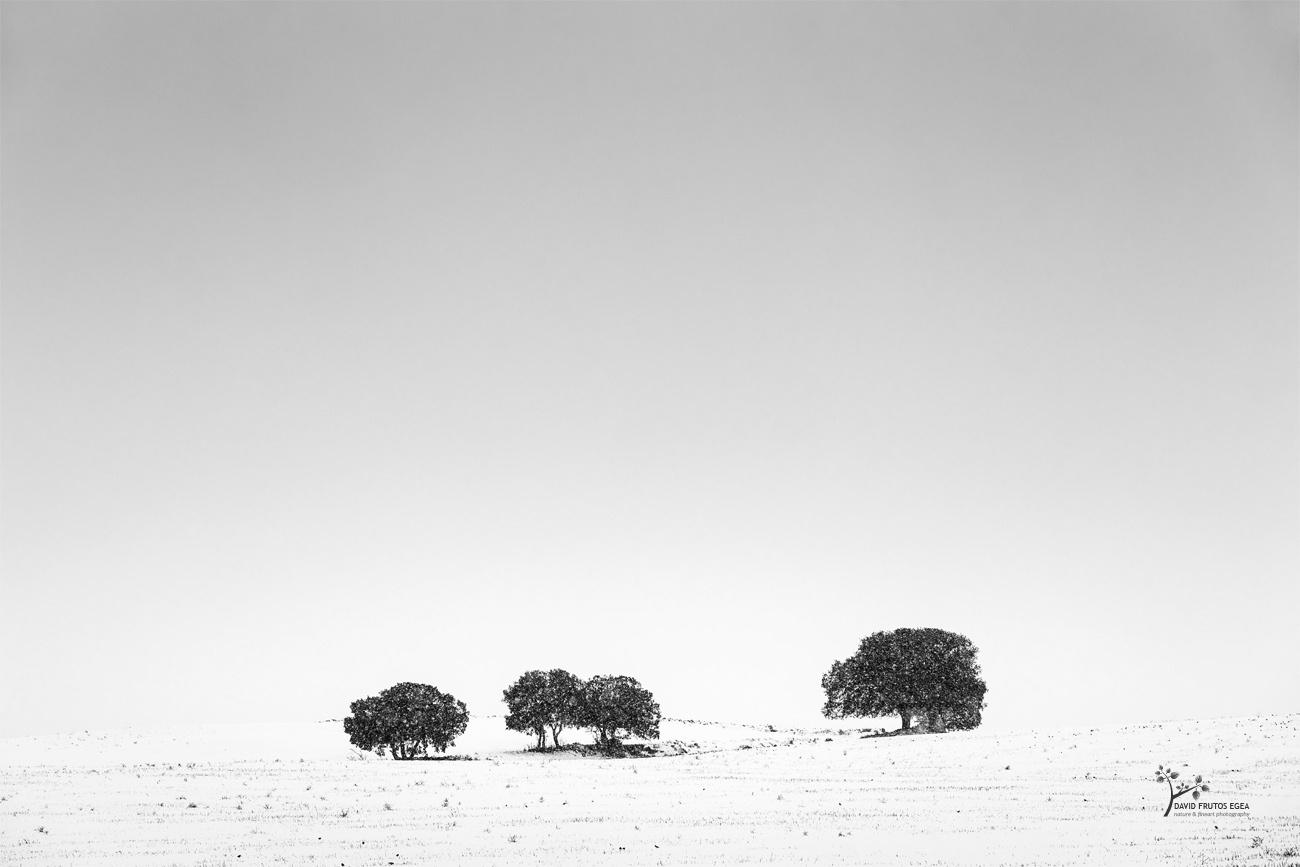 Four Under the Snow - B&N - David Frutos Egea | Fotografías en Blanco y Negro