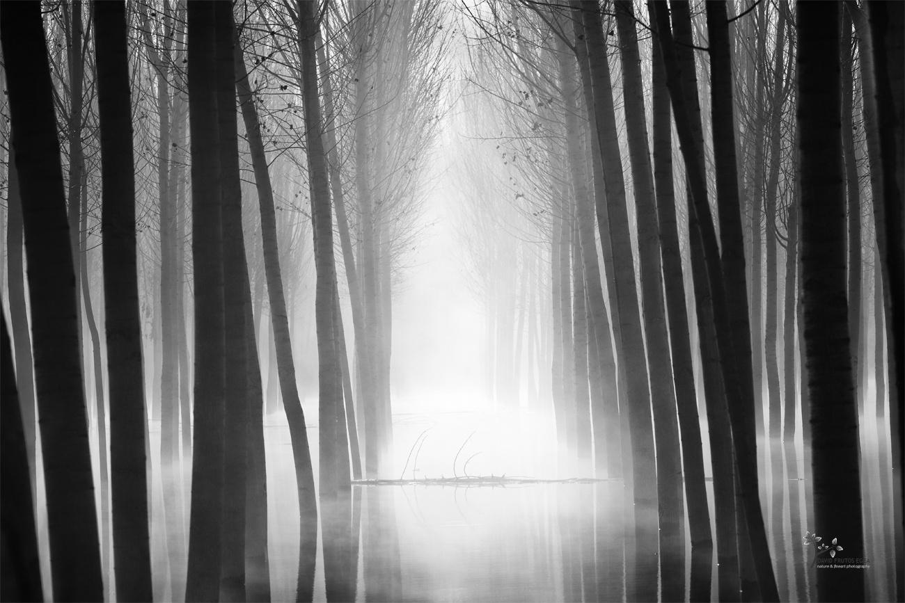 Nessy - Seres del Pantano - David Frutos Egea | El agua y la niebla son protagonistas.