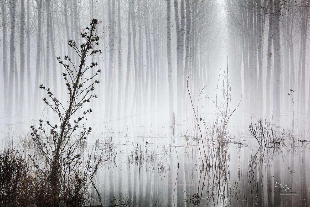 Chaos in the Fog - Seres del Pantano - David Frutos Egea   El agua y la niebla son protagonistas.