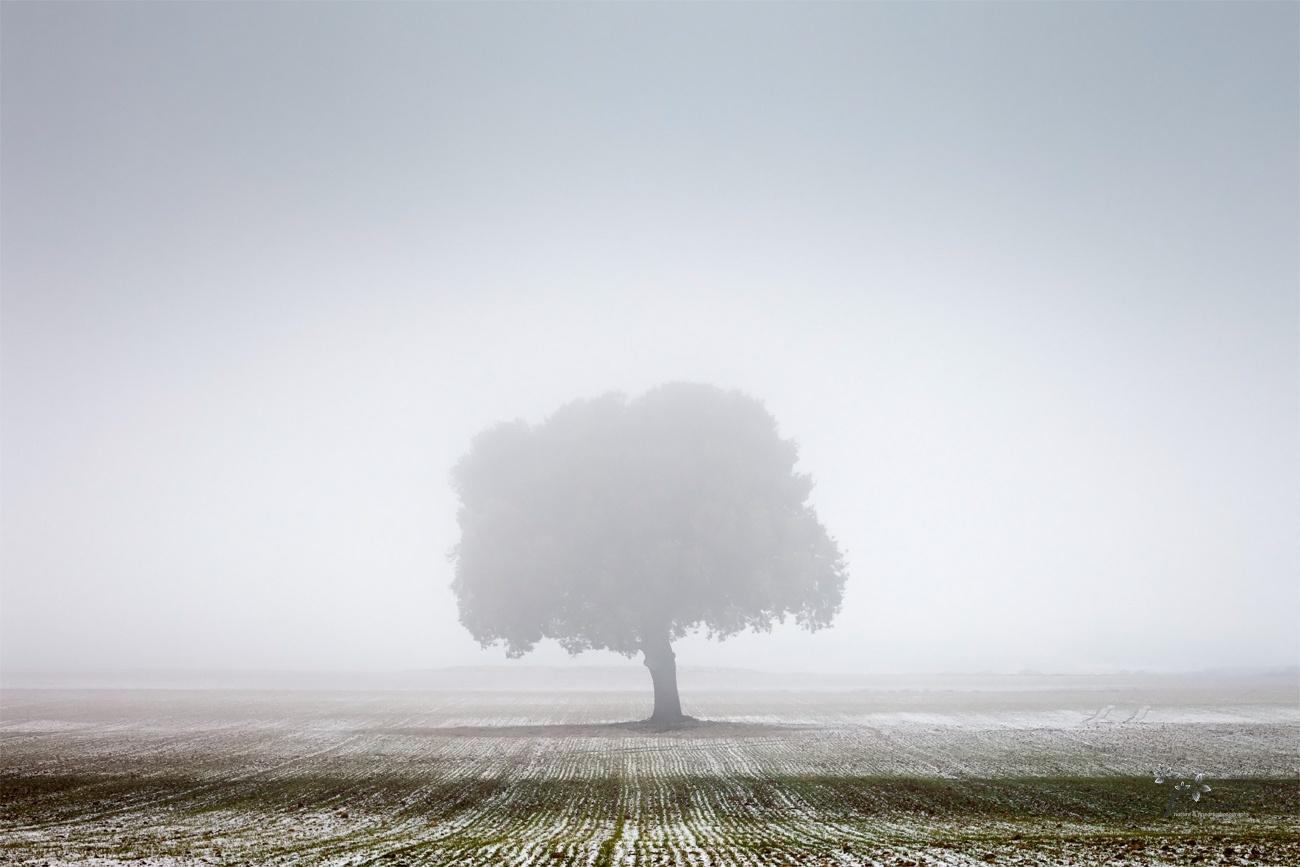 Solitude - Color - David Frutos Egea | Fotógrafías en color