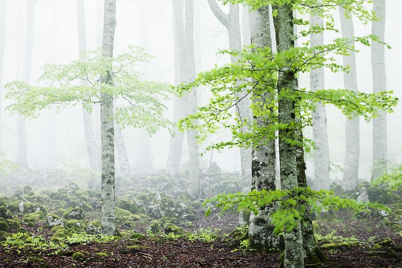 Reborn Forest - Color - David Frutos Egea | Fotógrafías en color