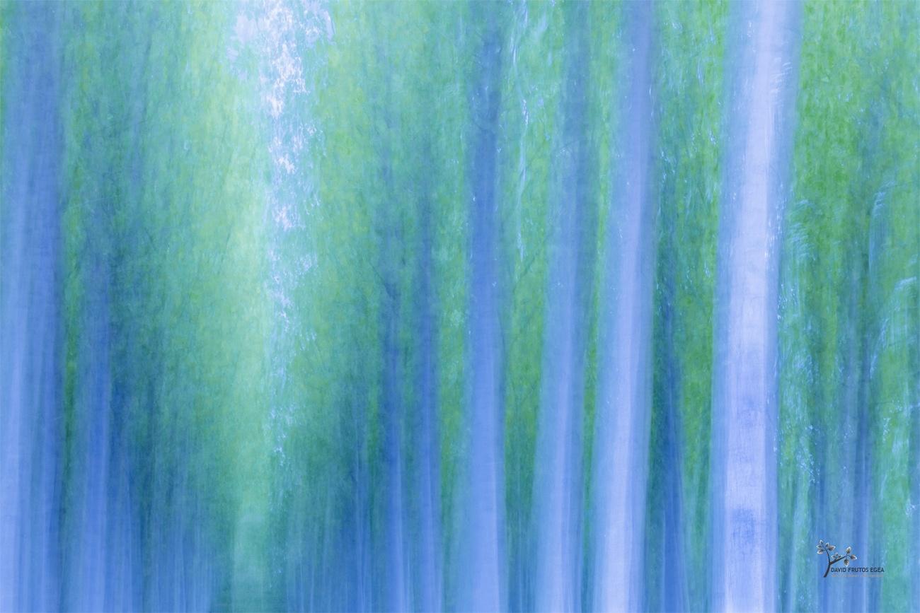 Surreal Forest - Pinceladas - David Frutos Egea | Visiones creativas en plena naturaleza.
