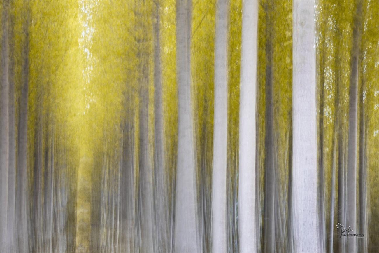Autumnal Symphony - Pinceladas - David Frutos Egea | Visiones creativas en plena naturaleza.