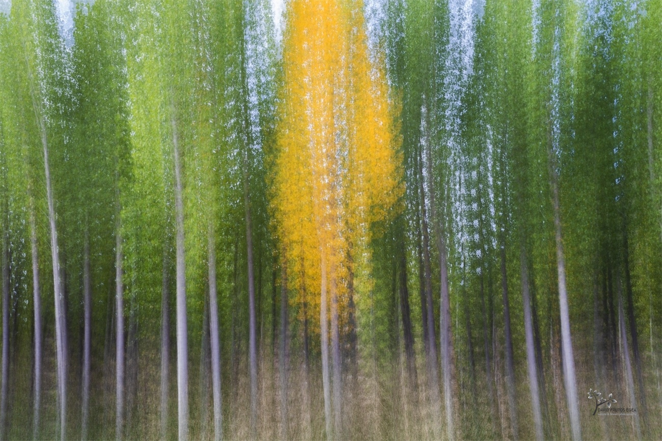 Divergent - Pinceladas - David Frutos Egea | Visiones creativas en plena naturaleza.
