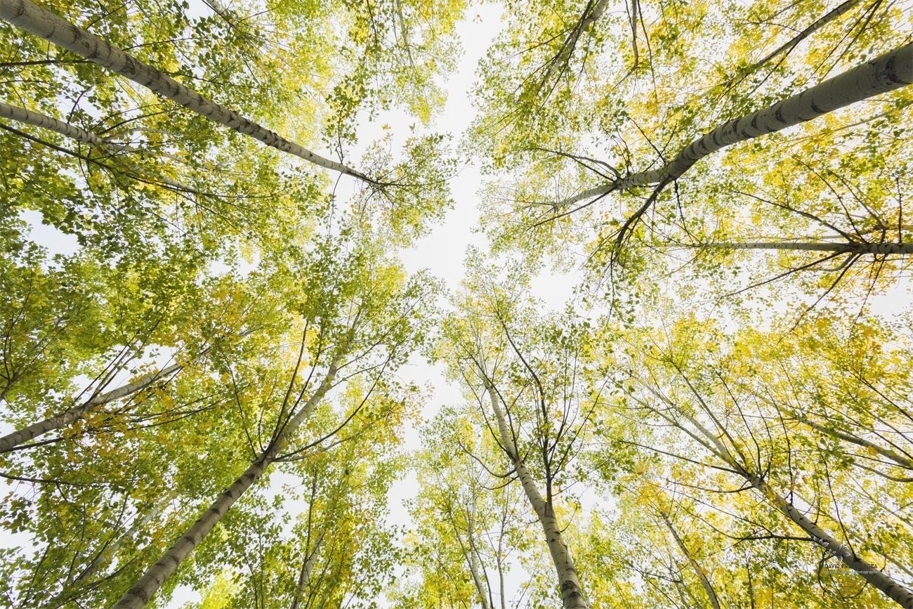 The Fall is Coming - Color - David Frutos Egea | Fotógrafías en color