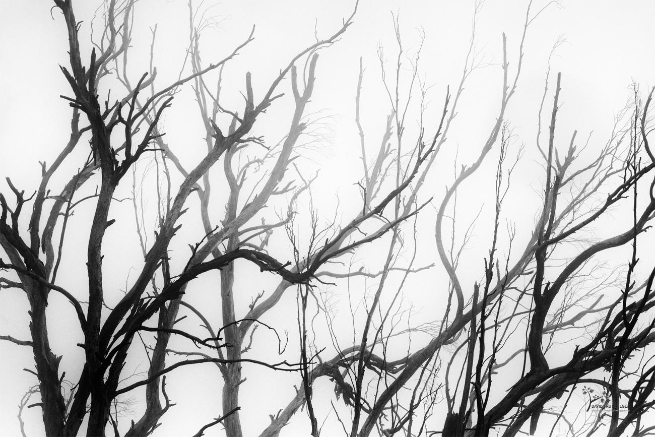 Chaos - B&N - David Frutos Egea - Black and white photos