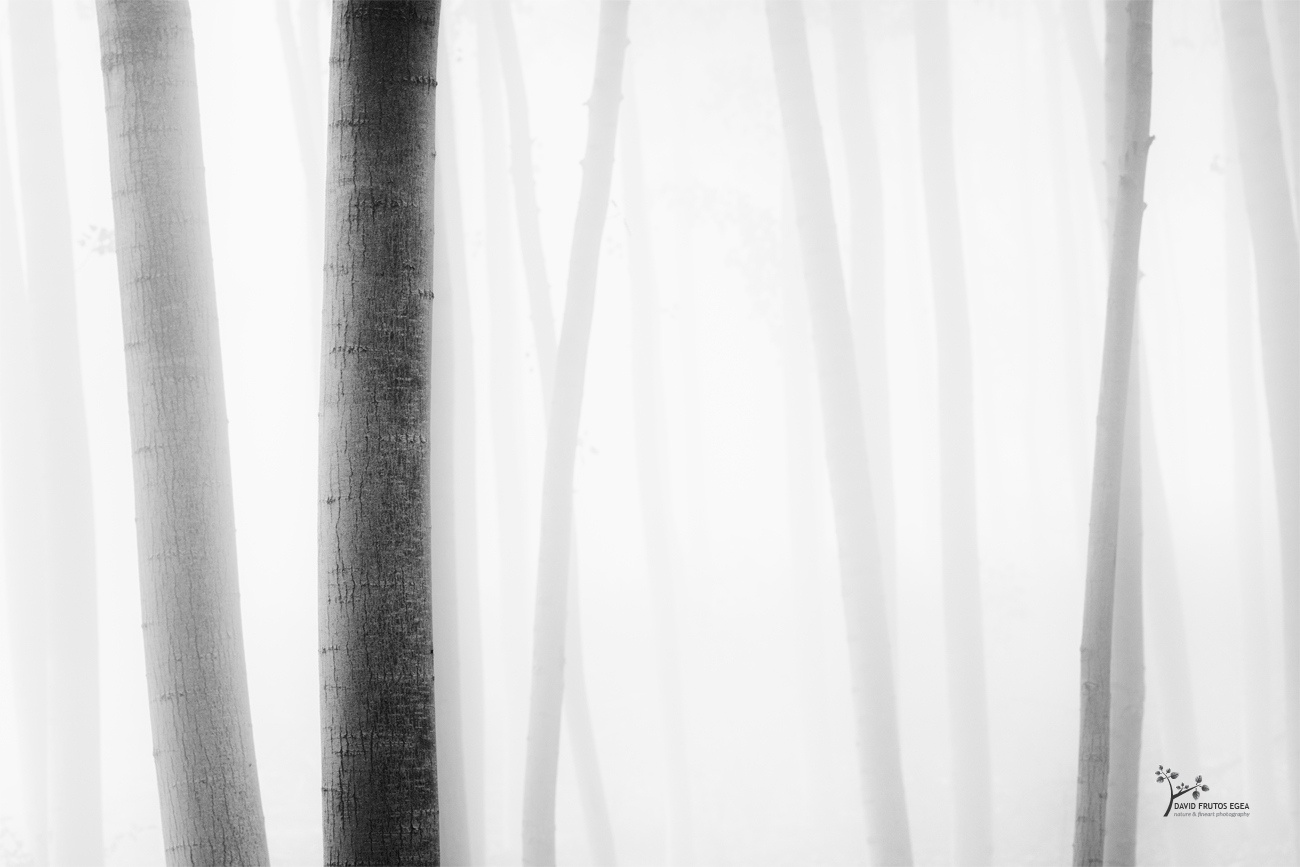 X-Ray in the Forest - B&N - David Frutos Egea - Black and white photos