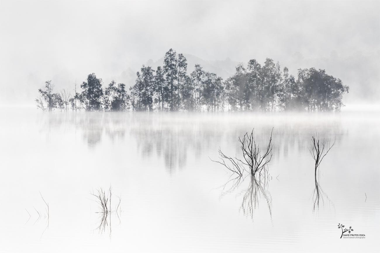 Four Souls and the Mysterious Island - Seres del Pantano - David Frutos Egea | El agua y la niebla son protagonistas.