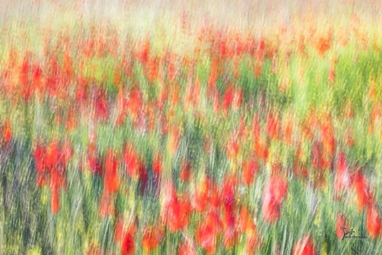 Field of Flowers - Pinceladas - David Frutos Egea | Visiones creativas en plena naturaleza.