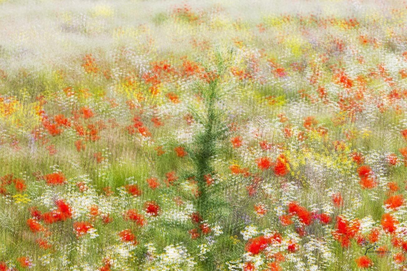 Primavera - Pinceladas - David Frutos Egea | Visiones creativas en plena naturaleza.
