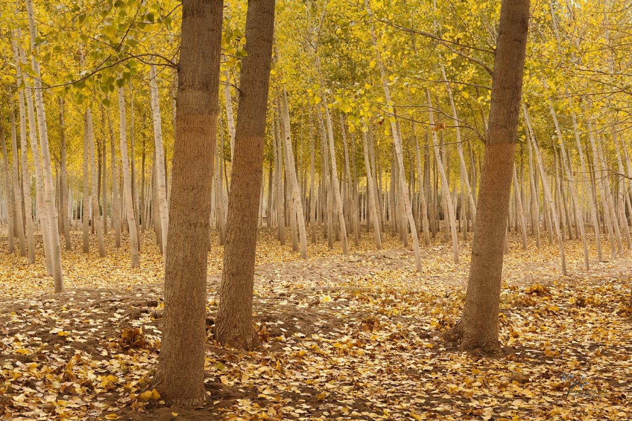 Autumn Lines - Color - David Frutos Egea   Fotógrafías en color