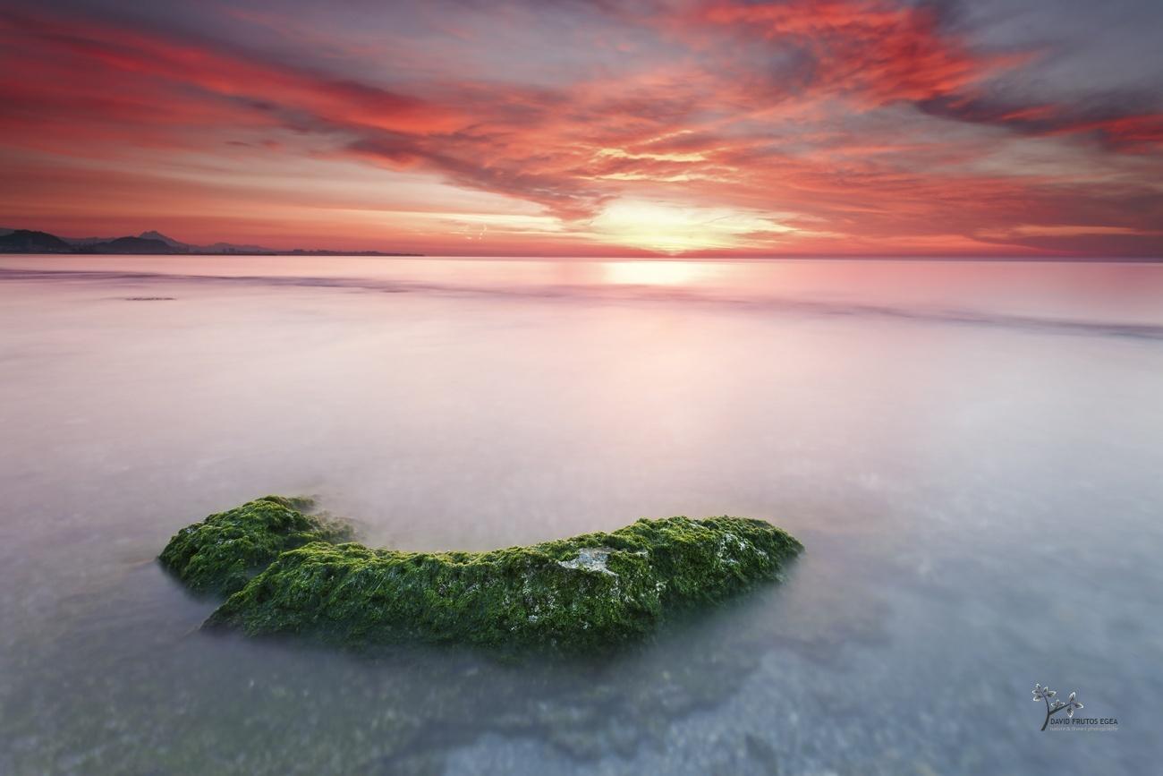 Green Salad - Color - David Frutos Egea | Fotógrafías en color
