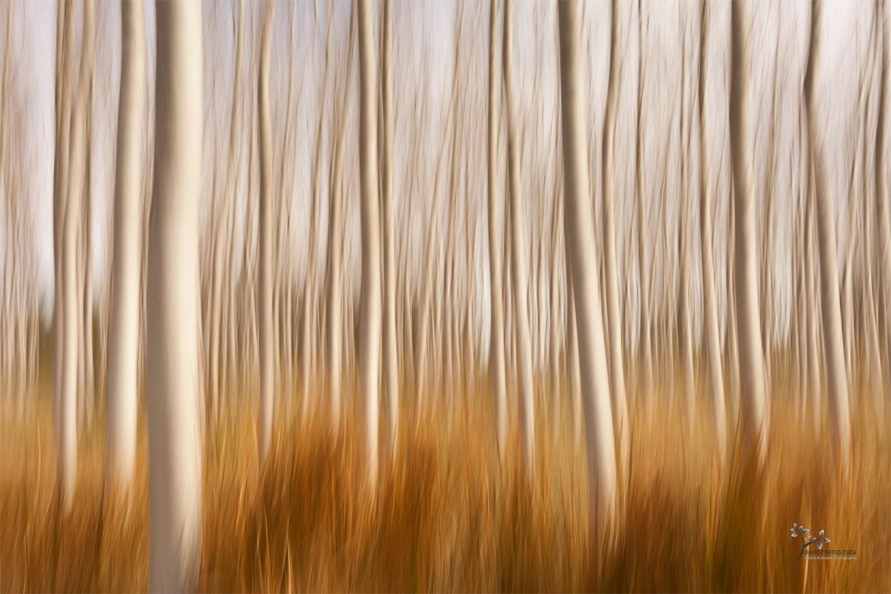 Spring Impressions in a Poplar Fields - Color - David Frutos Egea | Fotógrafías en color
