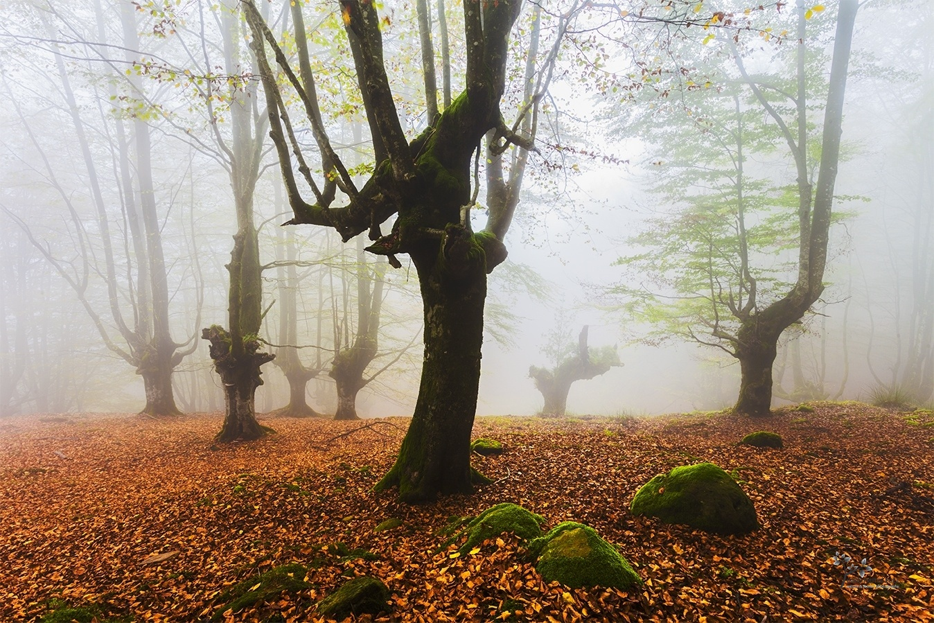 The Fairies´s World III - Mundo de Hadas - David Frutos Egea | Fotos del hayedo más bello de España.