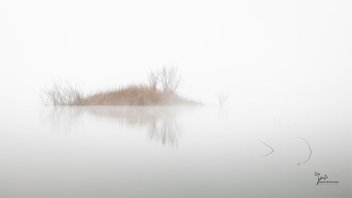 Like a Bird - Seres del Pantano - David Frutos Egea   El agua y la niebla son protagonistas.