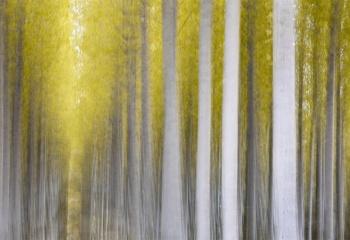 Under the Golden Forest