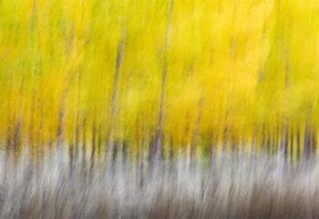 Autumnal Games