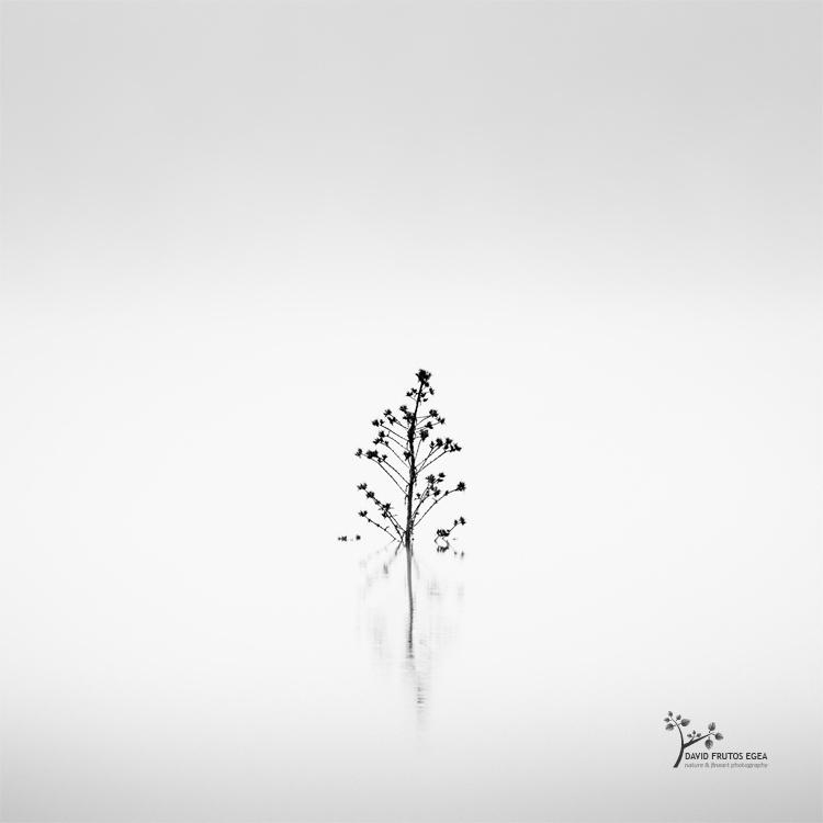 Death in the Swamp IX - Sentencia Natural - David Frutos Egea | Visiones minimalistas en blanco y negro.