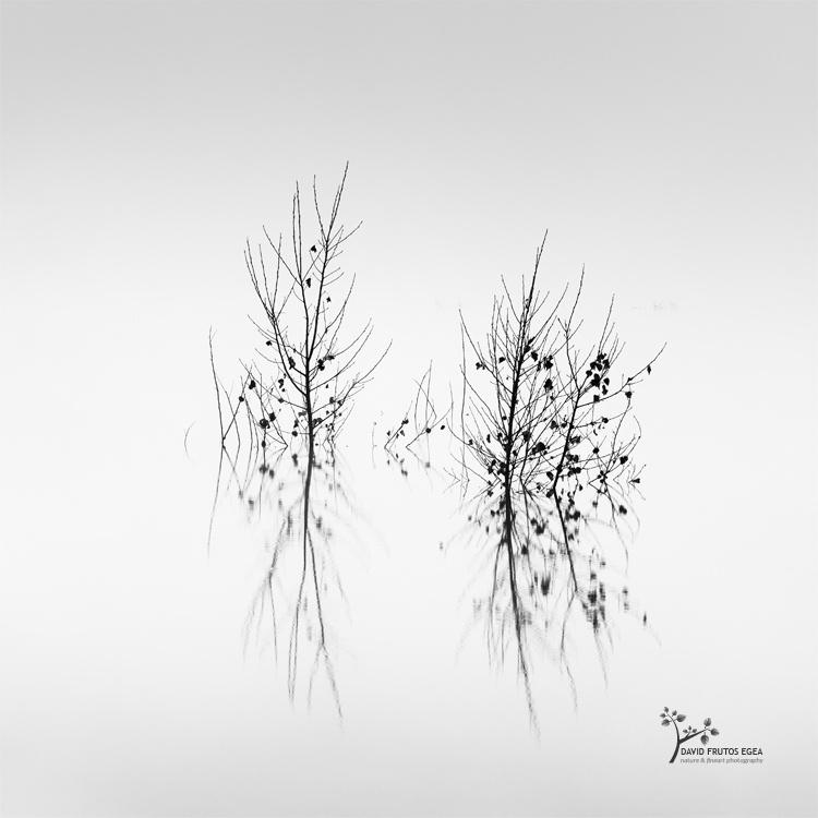 Death in the Swamp VIII - Sentencia Natural - David Frutos Egea   Visiones minimalistas en blanco y negro.