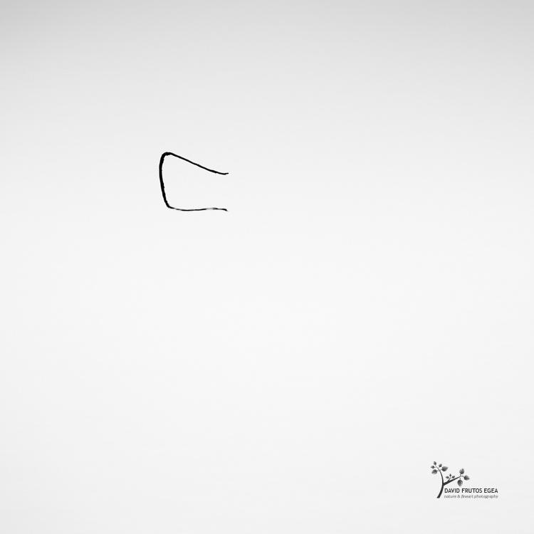 Death in the Swamp III - Sentencia Natural - David Frutos Egea | Visiones minimalistas en blanco y negro.