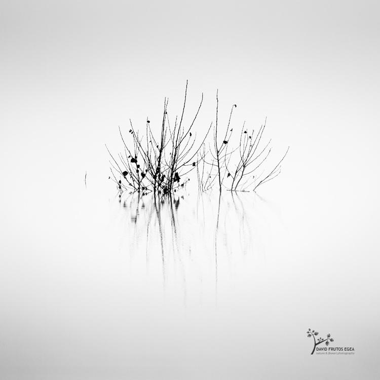 Death in the Swamp IV - Sentencia Natural - David Frutos Egea | Visiones minimalistas en blanco y negro.