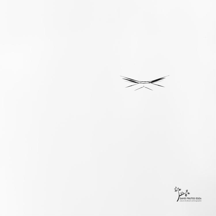 Cat Eyes (Death in the Swamp XII) - Sentencia Natural - David Frutos Egea | Visiones minimalistas en blanco y negro.
