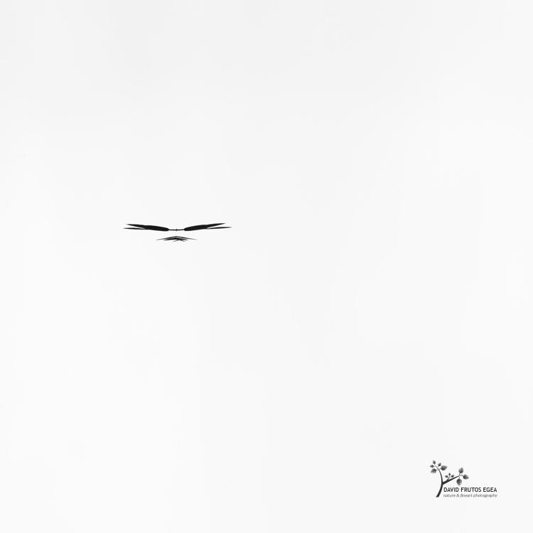 One Bird (Death in the Swamp XI) - Sentencia Natural - David Frutos Egea | Visiones minimalistas en blanco y negro.