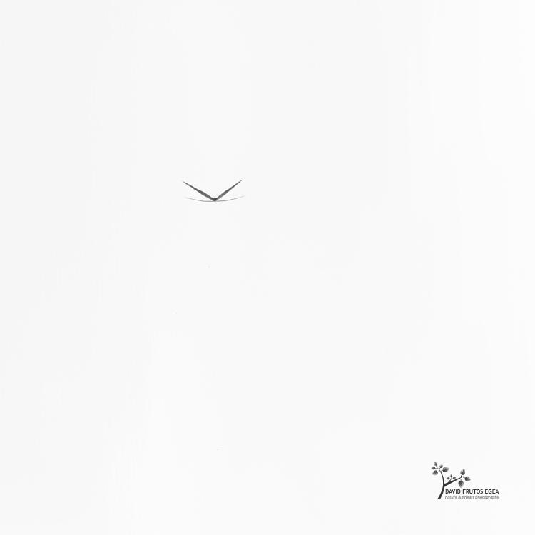 Flying (Death in the Swamp XIII) - Sentencia Natural - David Frutos Egea | Visiones minimalistas en blanco y negro.