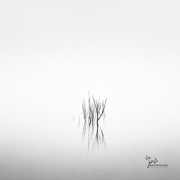 Death in the Swamp XIV - Sentencia Natural - David Frutos Egea | Visiones minimalistas en blanco y negro.