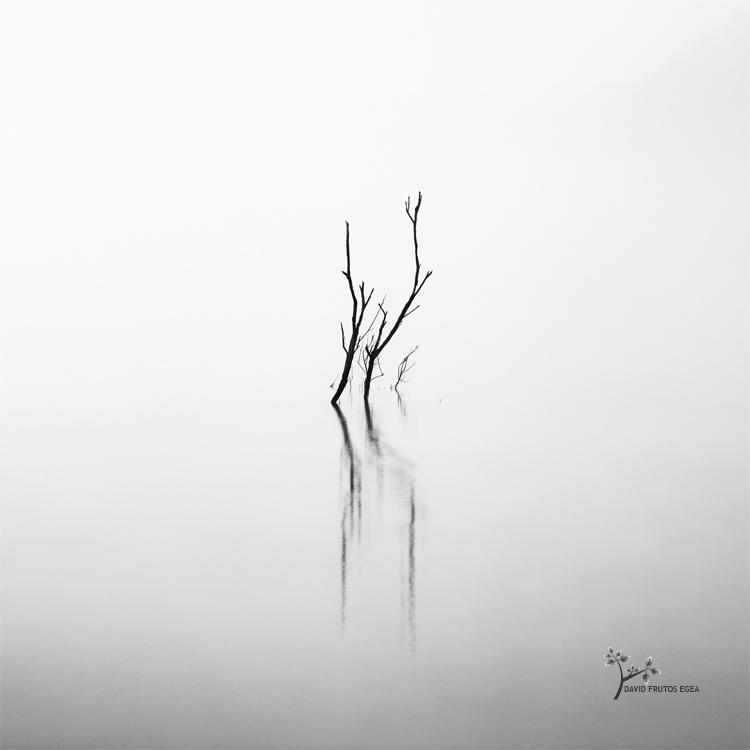 The Hand (Death in the Swamp XV) - Sentencia Natural - David Frutos Egea   Visiones minimalistas en blanco y negro.