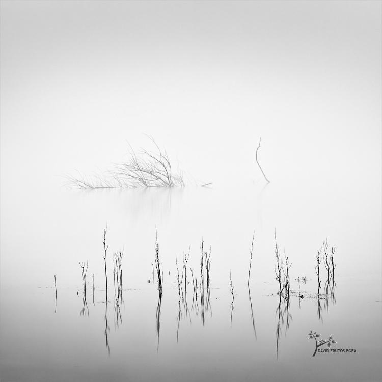 Death in the Swamp - Sentencia Natural - David Frutos Egea | Visiones minimalistas en blanco y negro.