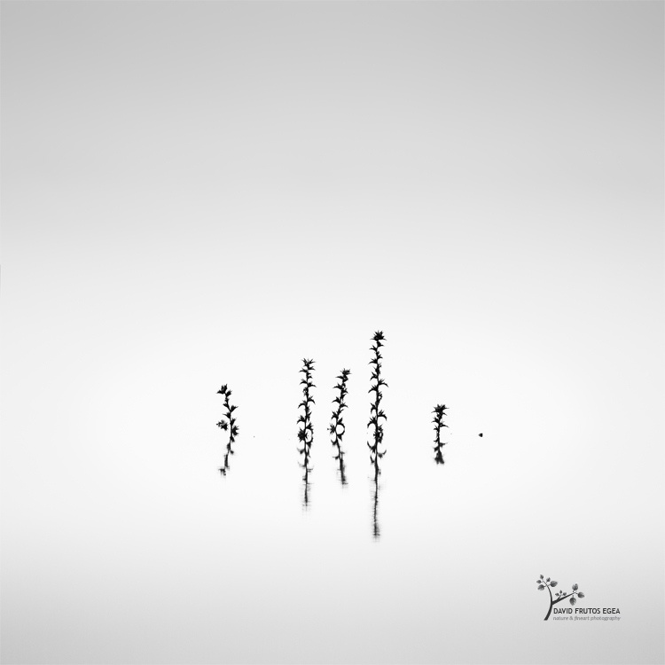i i i I i . (Death in the Swamp II) - Sentencia Natural - David Frutos Egea | Visiones minimalistas en blanco y negro.