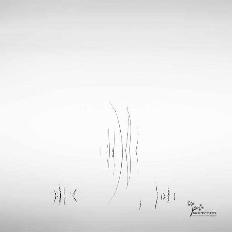 Death in the Swamp V - Sentencia Natural - David Frutos Egea | Visiones minimalistas en blanco y negro.