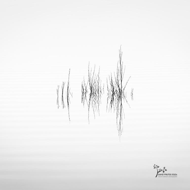 Death in the Swamp X - Sentencia Natural - David Frutos Egea | Visiones minimalistas en blanco y negro.