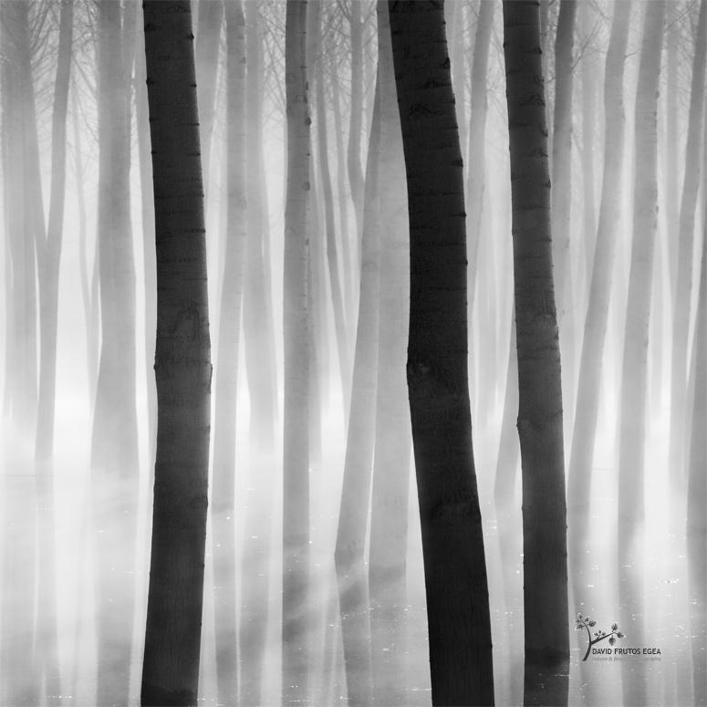 Barcode - B&N - David Frutos Egea | Fotografías en Blanco y Negro