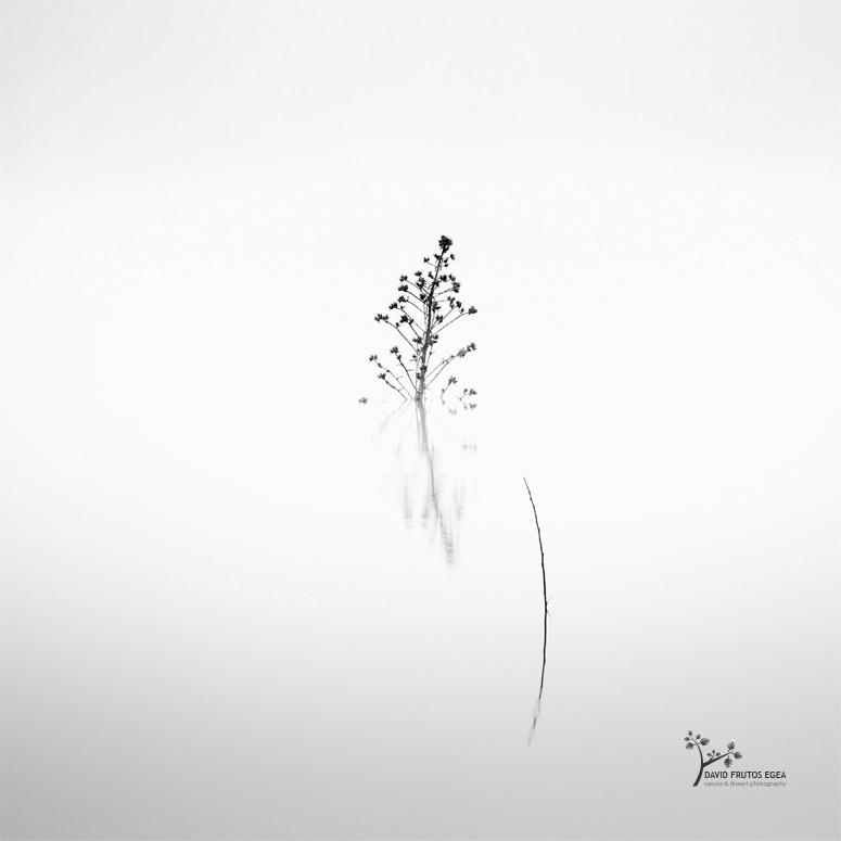 Death in the Swamp VII - B&N - David Frutos Egea - Black and white photos