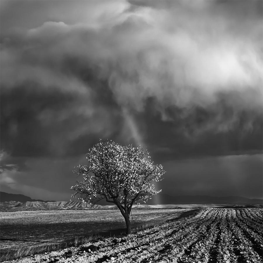 One Almond Tree Under the Storm - B&N - David Frutos Egea | Fotografías en Blanco y Negro
