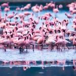 pink jacuzzi