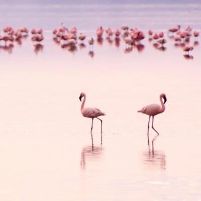 pink                                                            ES.3