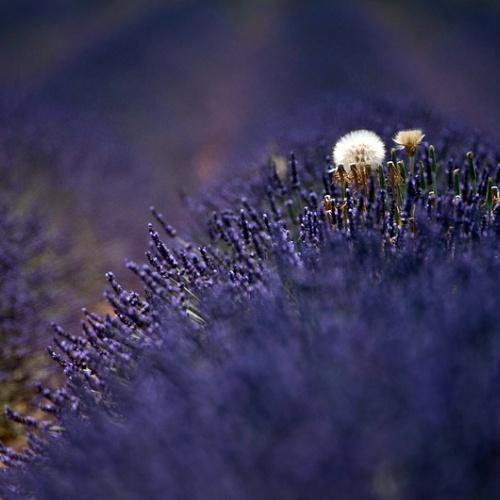 Provence & Lavande ... Promenades