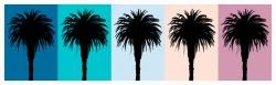 Palm 6