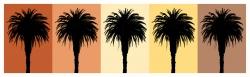 Palm 7