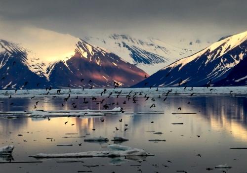 svalbard ártico