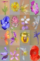 Composición 1. Flores silvestres.