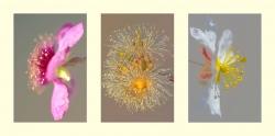 Composición 8. Flores silvestres.