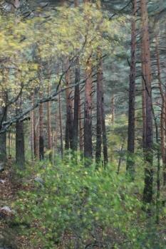 El viento. Abedular de Canencia. Noviembre 2011.