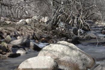 Saucedas. Rio Manzanares a su paso por La Pedriza. Invierno 2011