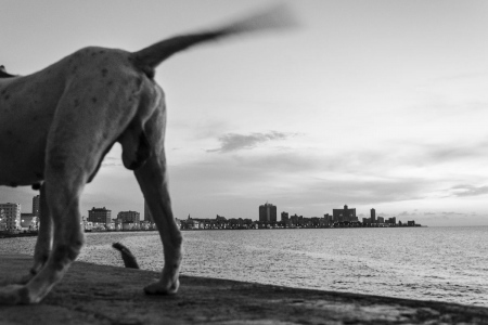 dogs back in Havana, Cuban photo tours of Louis Alarcon